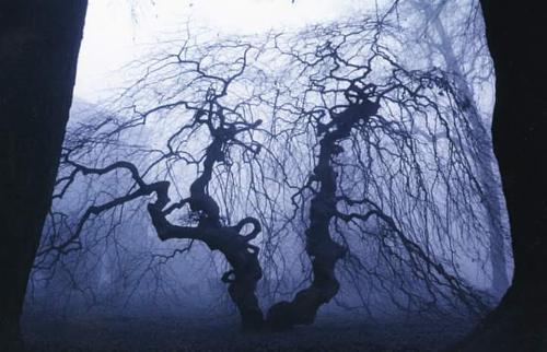 arbre_noir_nu.jpg