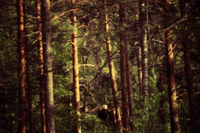 bigfoot_patterson01-new.png