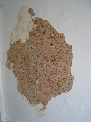 wallflowerSCP.jpg