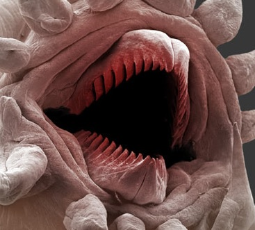 wormskin-mouthparts-2.jpg