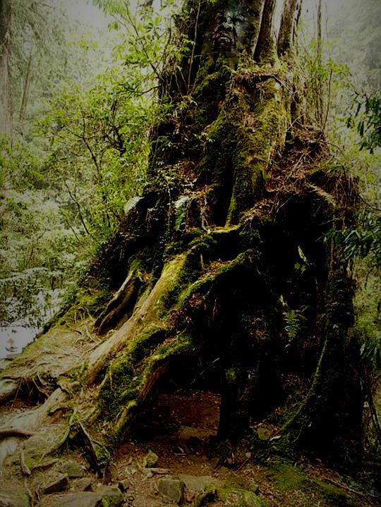 arbre6.jpg