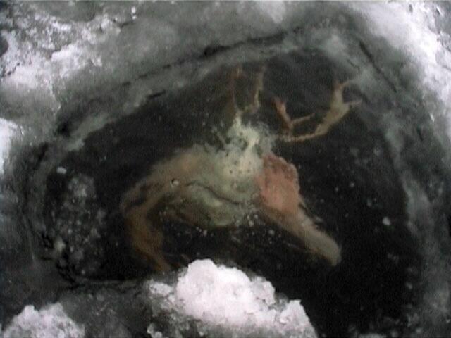 icewater.jpg