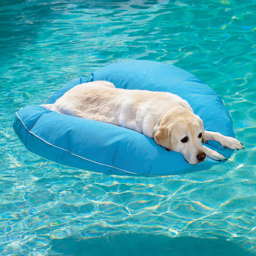 dog-pool-float-1.jpg