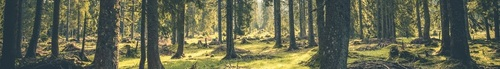 foret2
